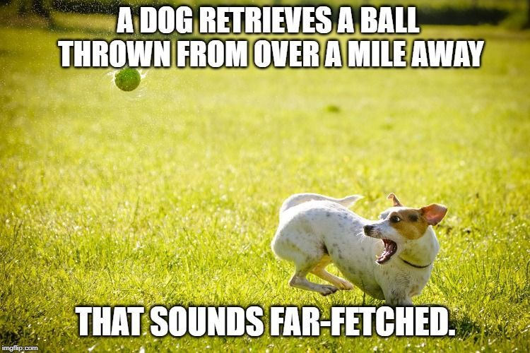 How To Teach Your Dog To Fetch A Ball From A Far Off Distance