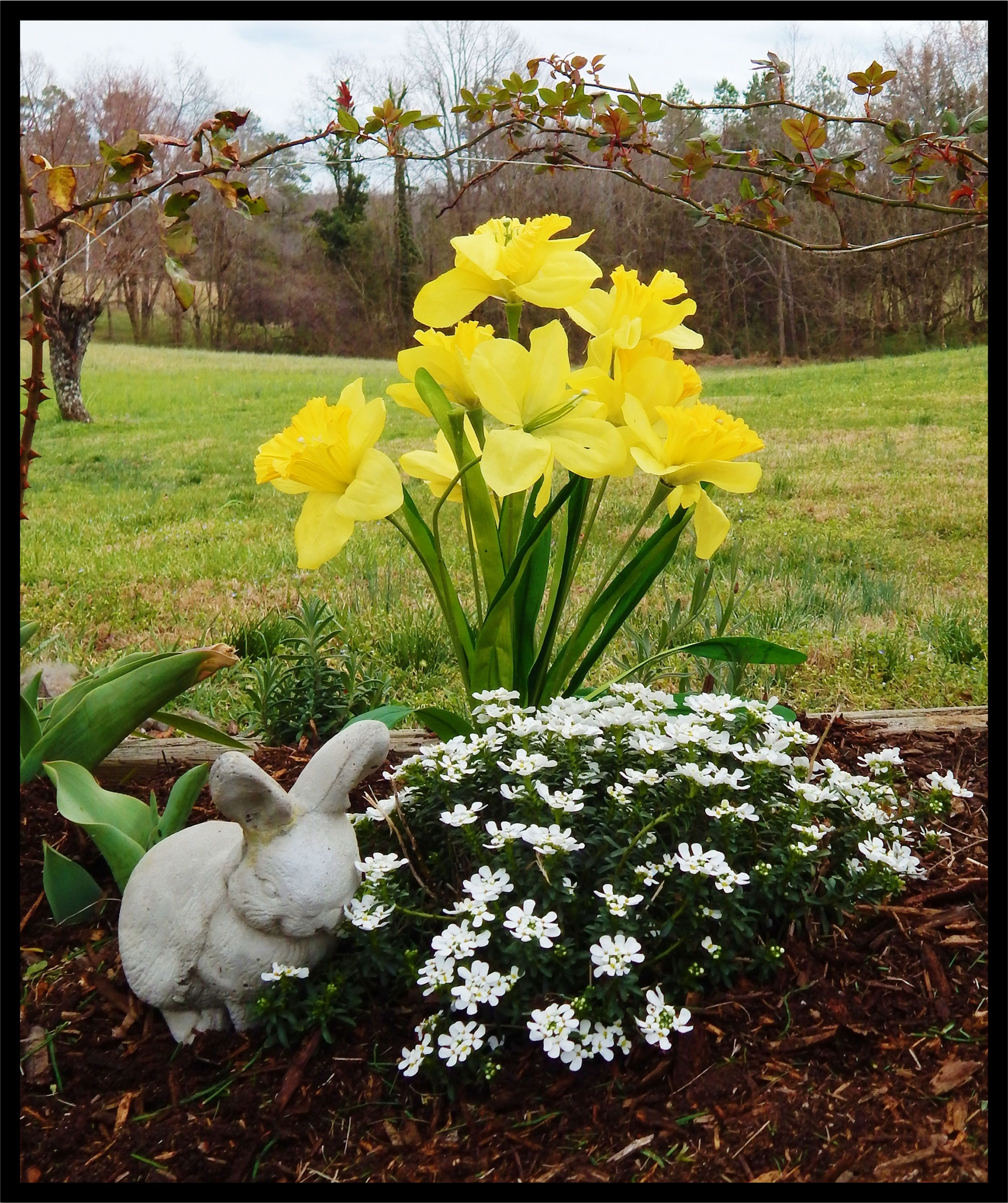 Placed artificial daffodils( purchased from Walmart) behind spring flowers.