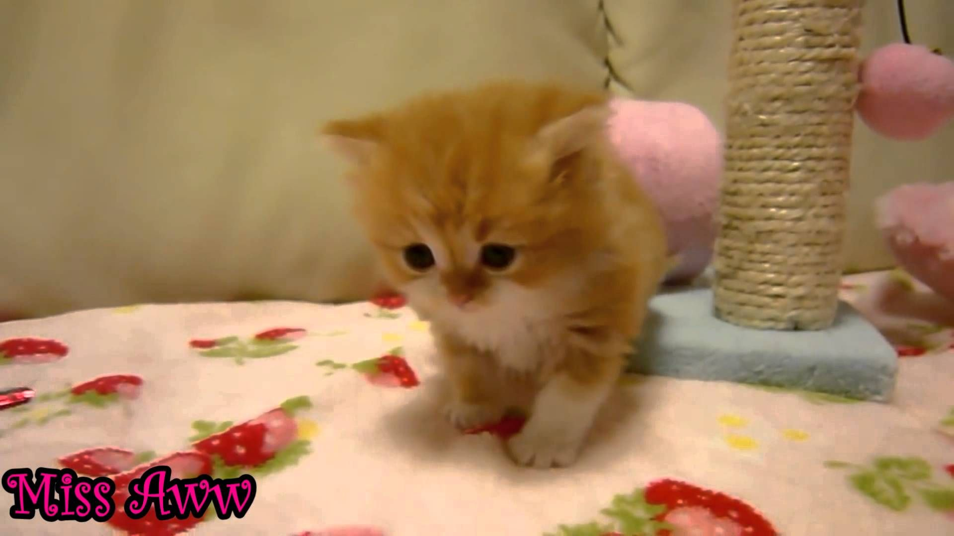 Pin by Matthew Waters on Fun Cat Board Kittens cutest