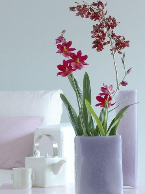 Dekoration Mit Orchideen 14 Exklusive Erfrischende