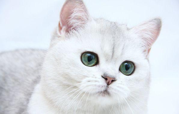 Animated Cat Screensavers Screensaver Wallpaper Cats Animated Screensavers Mobile Cats Animated