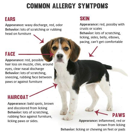 Ever Thought That Maybe Your Pet Needs Claritin Too? Read