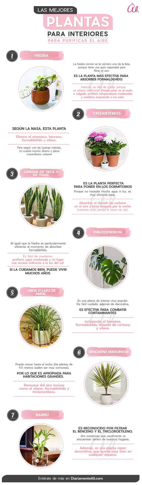Plantas Para Interiores Purificadoras De Aire Jardineria Y Terraza Para Tu Casa Articulos Diariamente En 2020 Plantas Jardineria Y Plantas Plantas De Interior