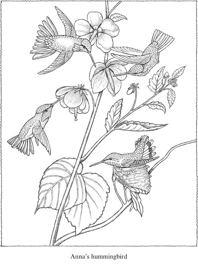 Creative Haven Audubon Birds Coloring Book 6 Sample
