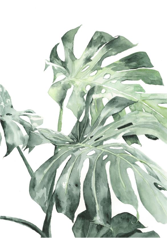 Photo of Städtischer botanischer Druck – Leahs Kennzeichen-Illustration
