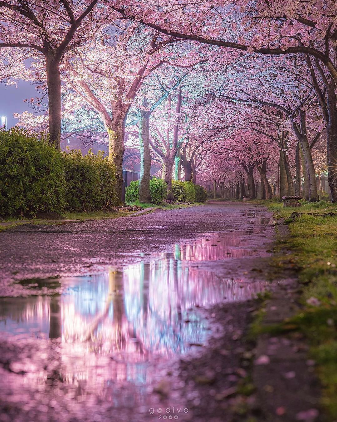 Beautiful Shot In Japan By Godive2000 Pics Nature Photography Landscape Photography Cherry Blossom Japan