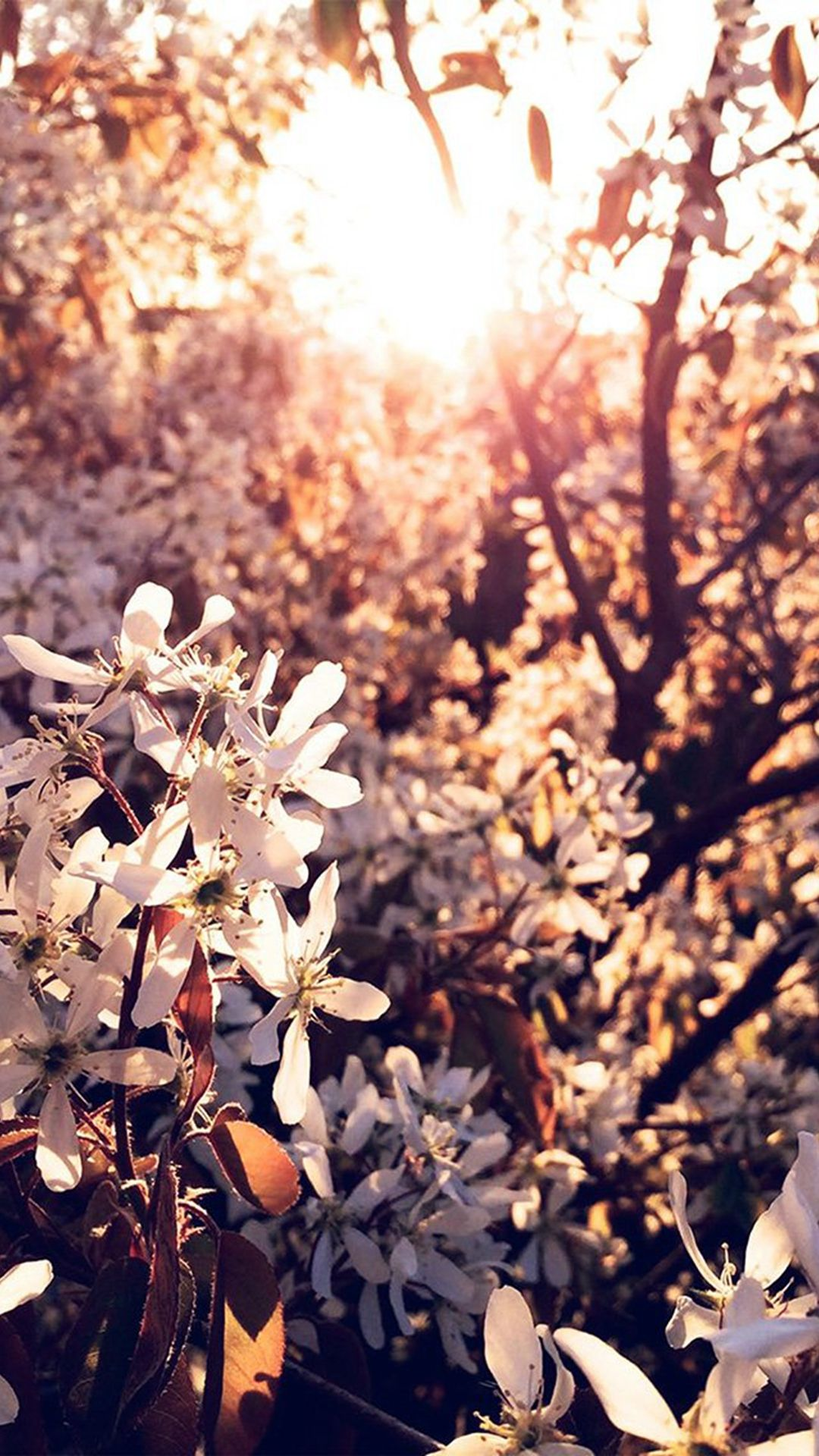Tree Flower Blossom Spring Nature Iphone 6 Wallpaper Nature