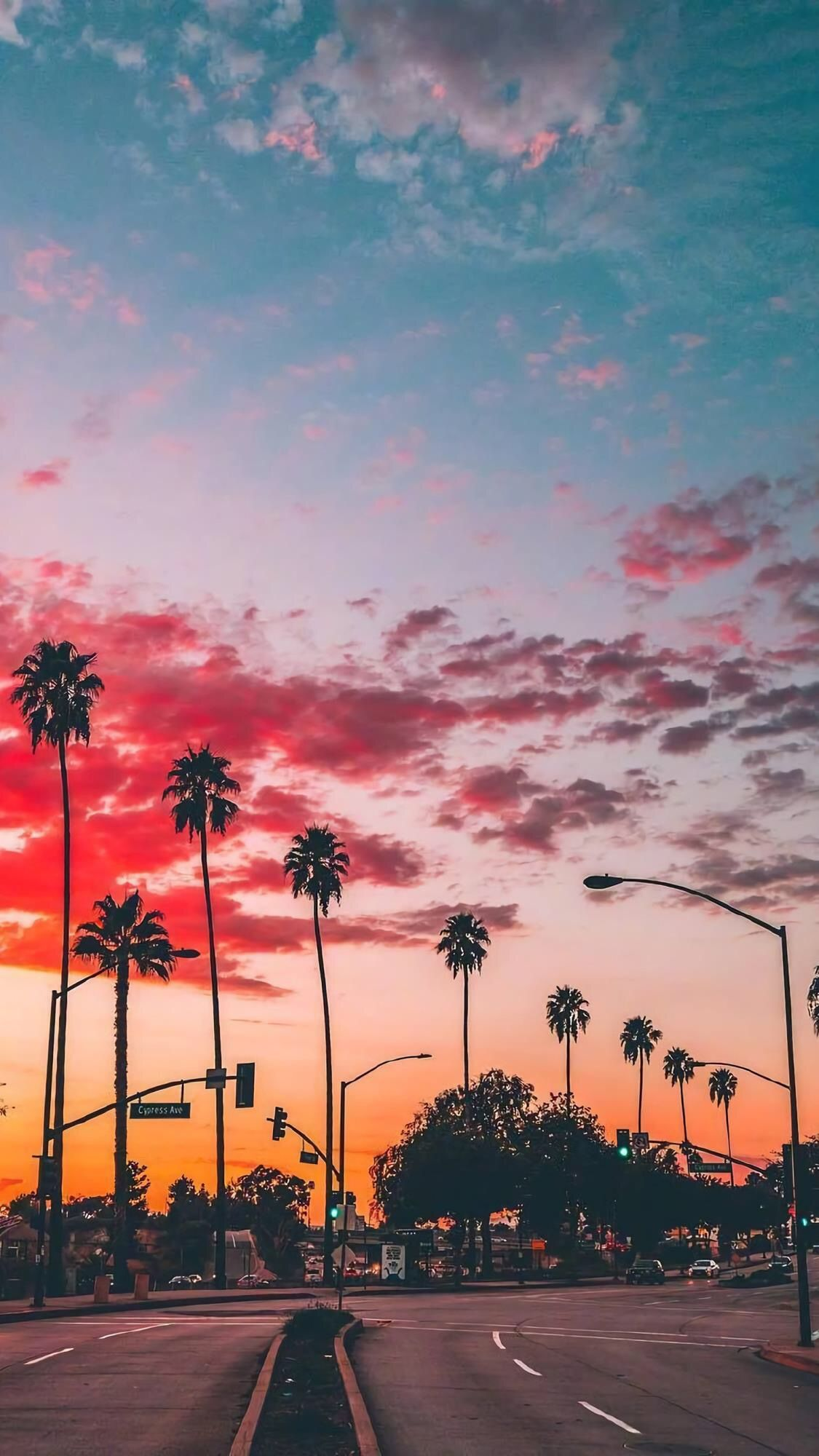 pink sunset, exuberant palm trees in the city for your