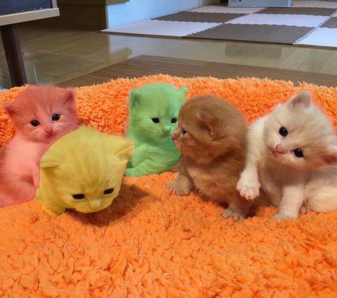 Pin Oleh Zakiyyatun Di Kucheng Tempat Tidur Kucing Anak Kucing Kucing Hitam