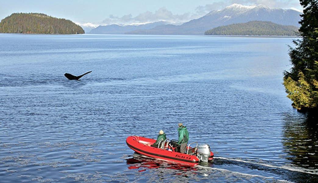 Buy Cheap Zodiac Boat Scenic Tour Ketchikan  1.5 Hours #adventures #travel #gift