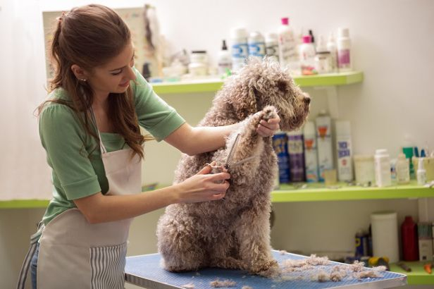 Tips On Finding The Best Dog Salon Dog Groomers Dog Grooming Pet Groomers