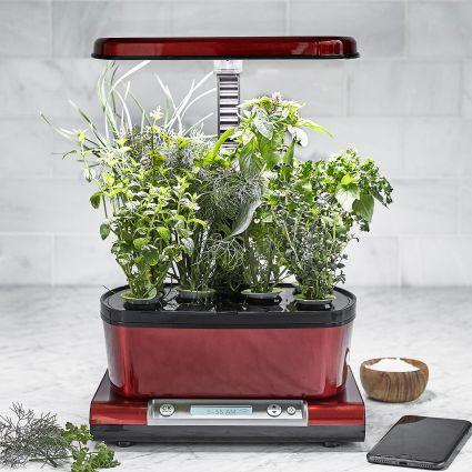 Sur La Table Aerogarden Harvest Elite Gourmet Herbs Seed 400 x 300