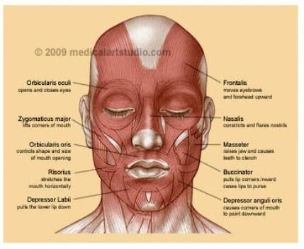 Facial Exercises For Cheeks Google Search Face Fitness