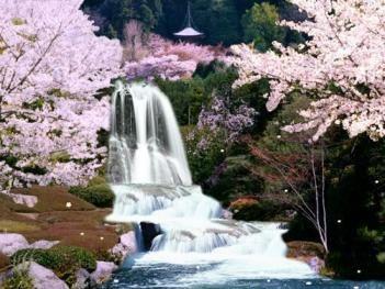 Pin On Japanese Gardens