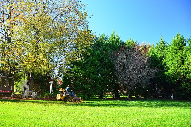 Turn your lawn into a green oasis. landscaping lawncare