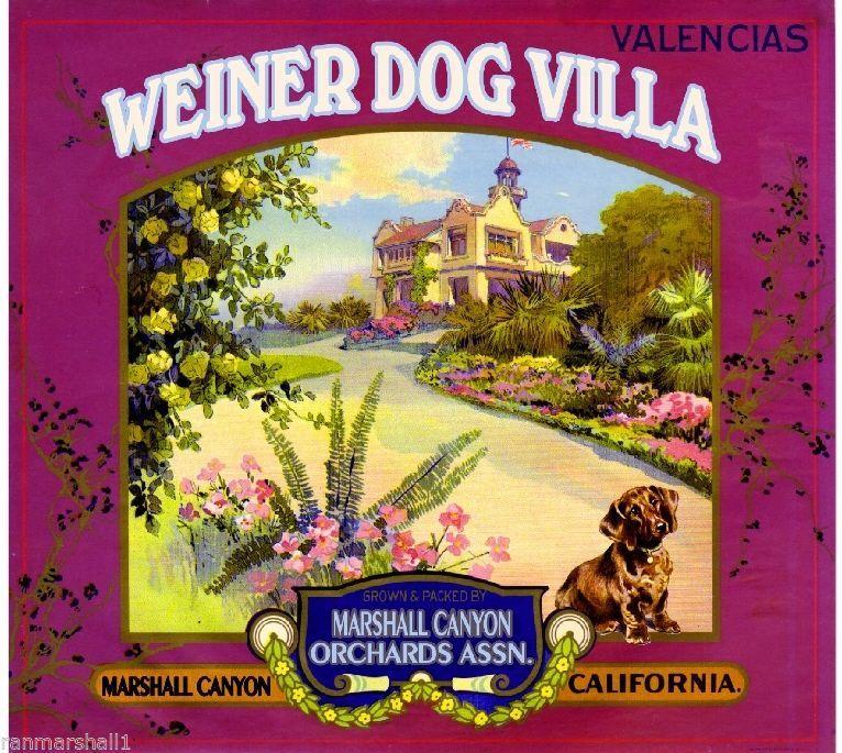 Marshall Canyon Weiner Dachshund Dog Orange Citrus Fruit Crate