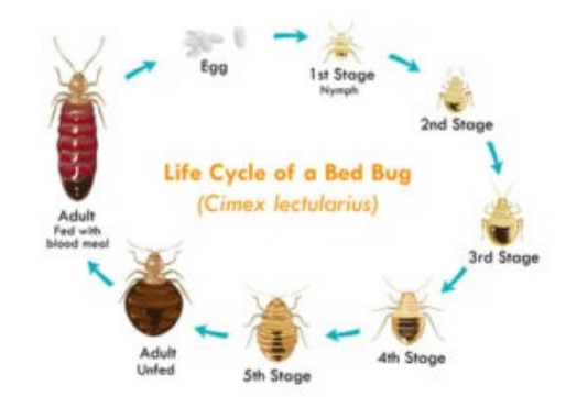 What Are The Best Ways To Get Rid of Bed Bugs Rid of bed