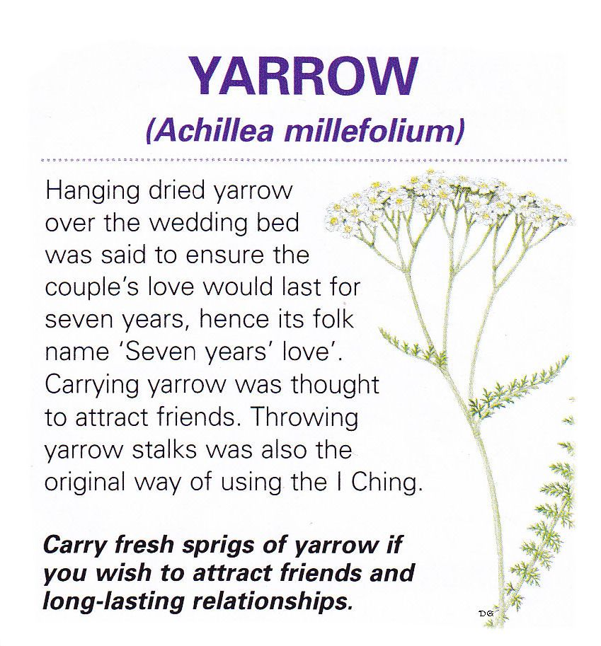 Magical Herb Yarrow Herbal Magic Herbs Magic Herbs