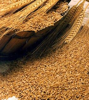 UmPratoPorDia: Trigo em grão refogadinho... É o Prato Do Dia!