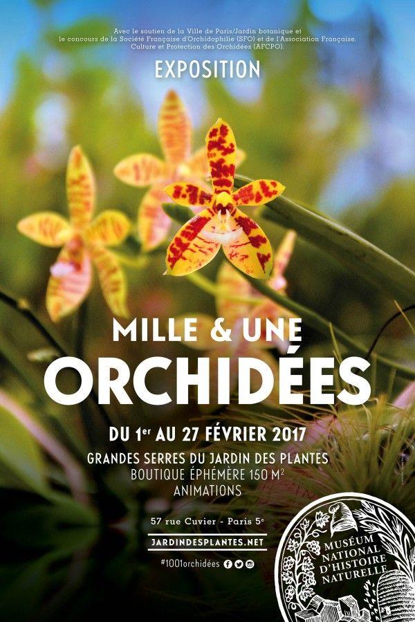 Mille et une Orchidées 2017 aux Grandes Serres du Jardin des ...