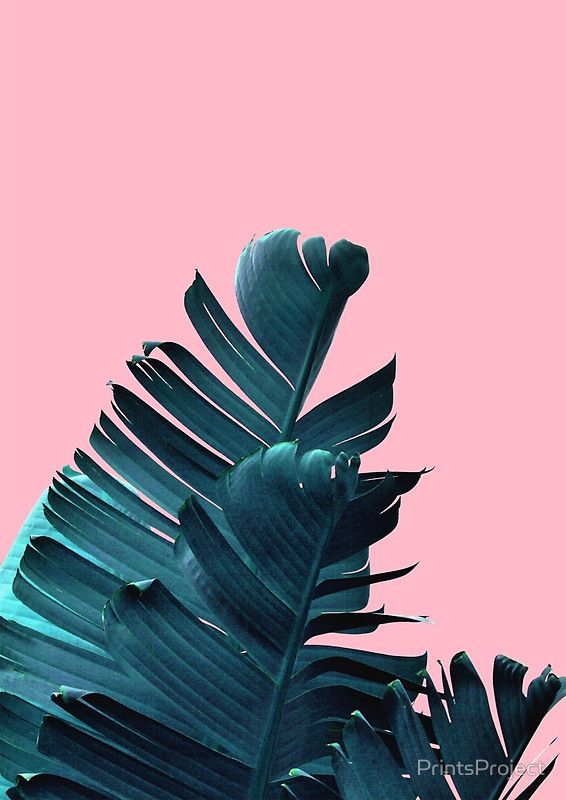 Banana Leaves, Tropical Leaf Print, Pink and Blue Plant