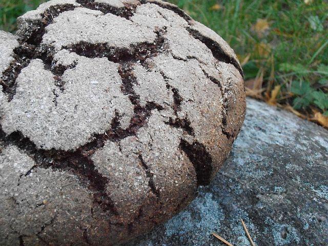 Luomulaakso.fi : Maltainen ruisleipä juureen