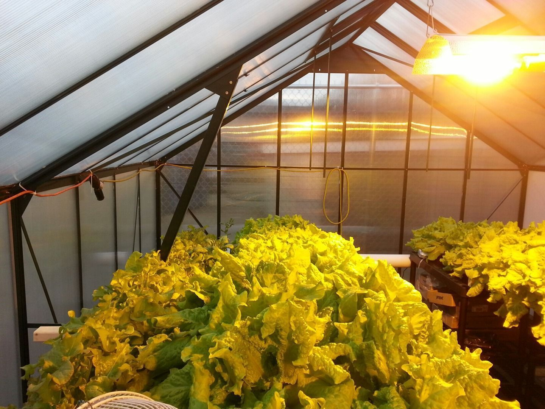 Hydroponics, Grow Lights, Organics in Ohio Gardening