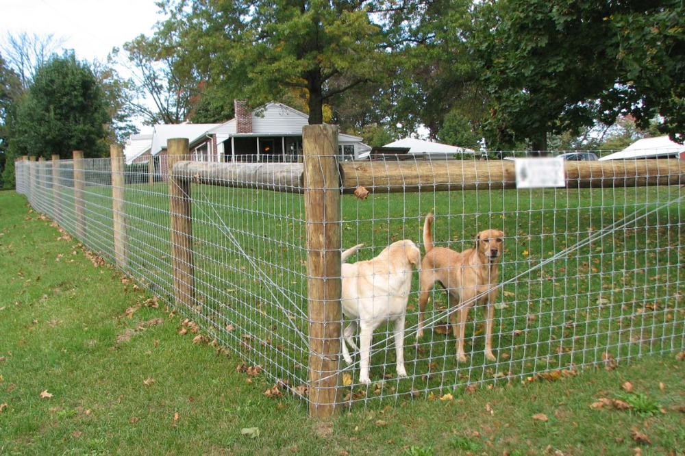 How Much Does It Cost To Fence A Yard? in 2020 | Dog fence