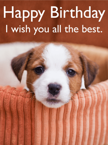 I Wish You All The Best Animal Birthday Card Birthday Card