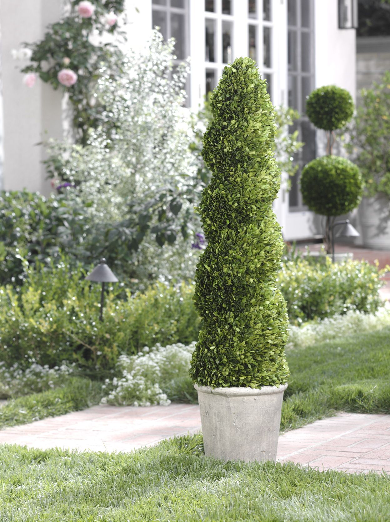Beautiful Green Spiral Topiary Tree For House Decor Beautiful