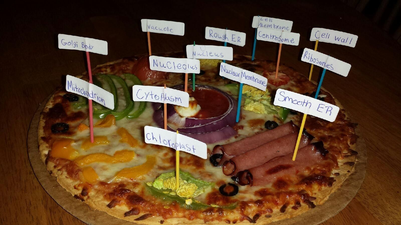 Pizza Plant Cell 5th Grade Science Project Cheese Pizza