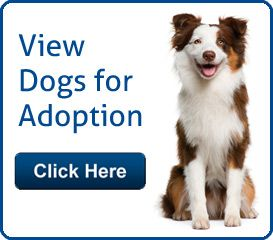 Adopt A Pet In Oklahoma City With Images Dog Adoption Rescue Dogs For Adoption Dog Adoption Near Me