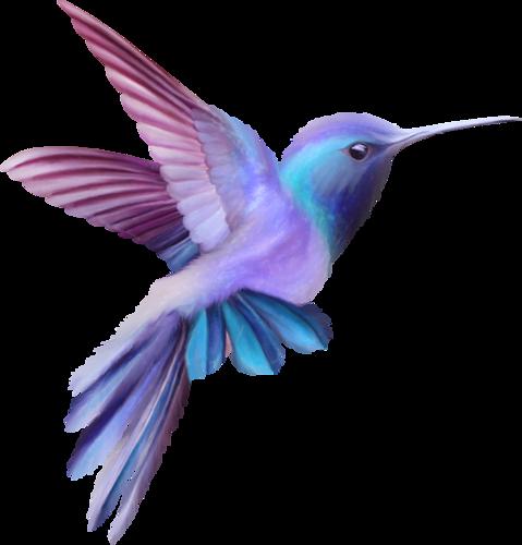 love blooms birds hummingbird