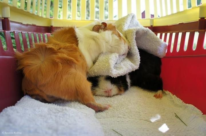 Boy, these new piggy beds are extra comfy! Wait, this really is a piggy bed? Yawn...