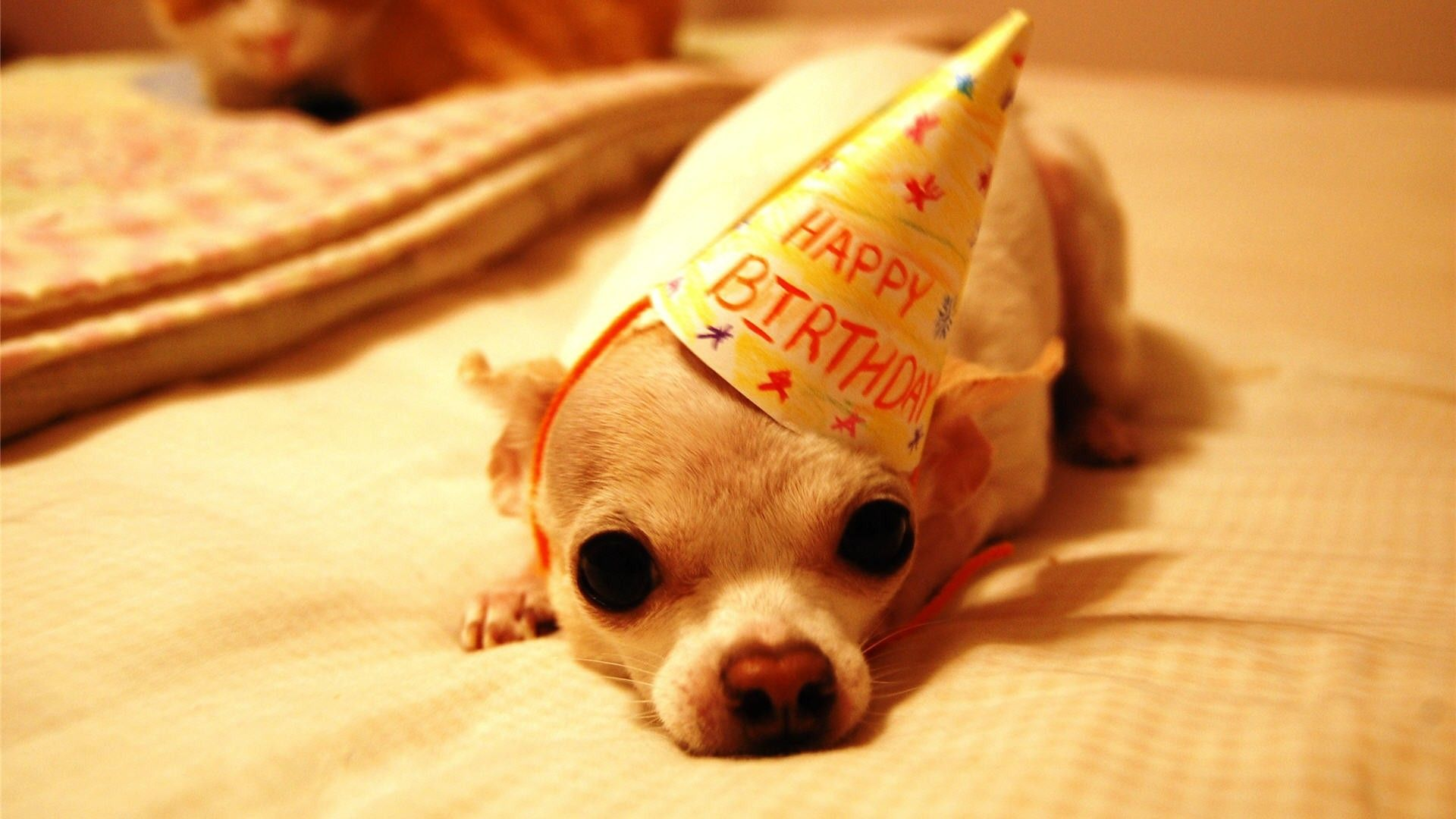 Happy Birthday Funny Little Puppy Hd Wallpaper Happy Birthday