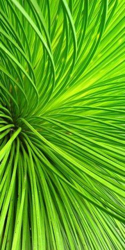 Close up tropische plant.