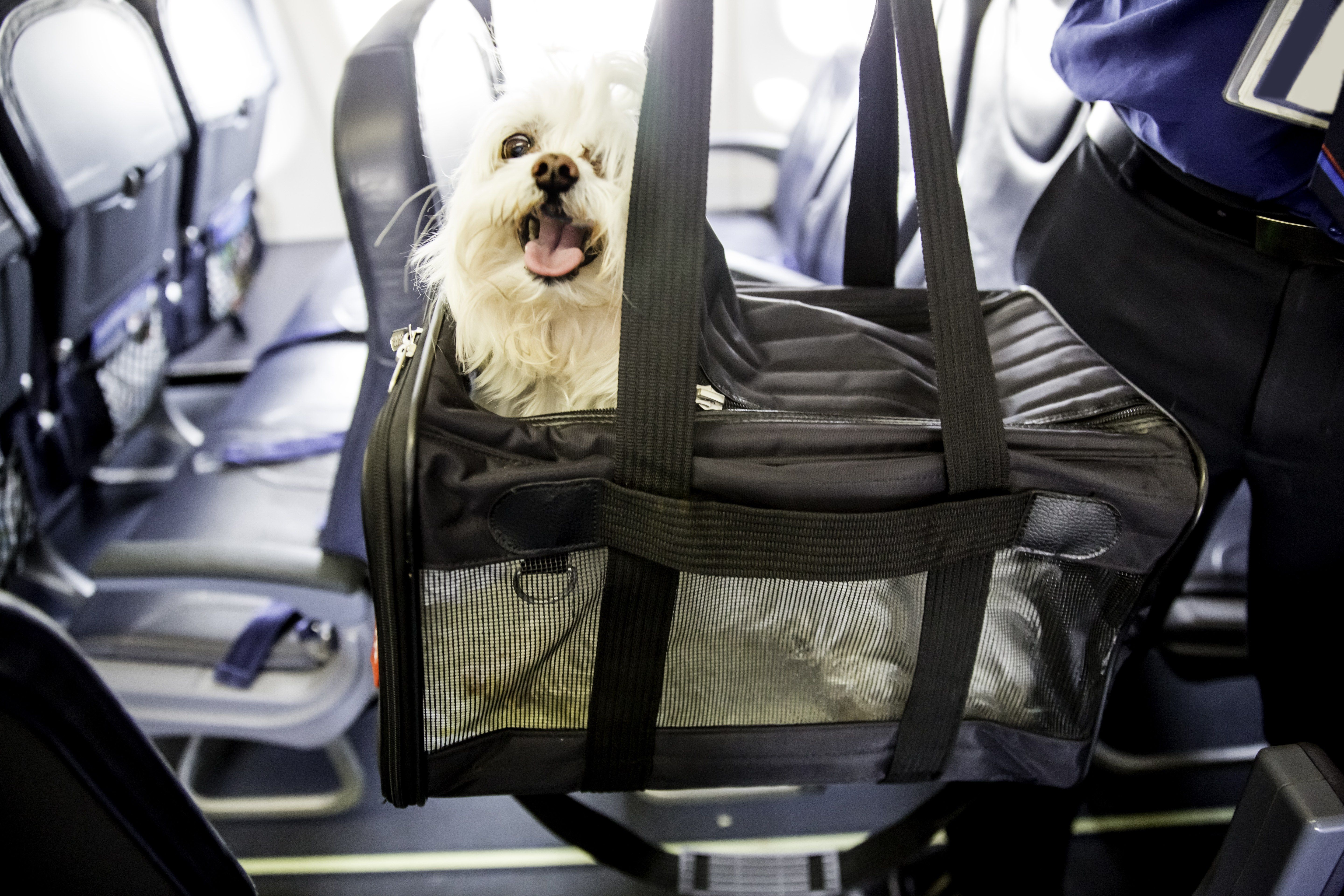 All Your Questions About Flying with a Dog, Answered Pet