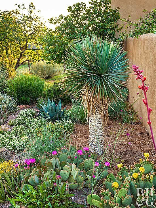 Create A WaterWise Landscape is part of Low water gardening, Water wise landscaping, Garden landscape design, Waterwise landscaping, Garden landscaping, Water garden - With many parts of the country under drought restrictions, this flowery garden leads by example and shows how low water can still produce high color