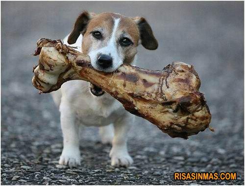 Perro con su huesecito  Ampliar imagen: http://bit.ly/HMpxmj
