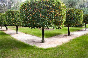 Photo of Immagine risultato per siepe di agrumi # agrume # siepe #immagine # risultato # agrumi # siepe #hedgec …