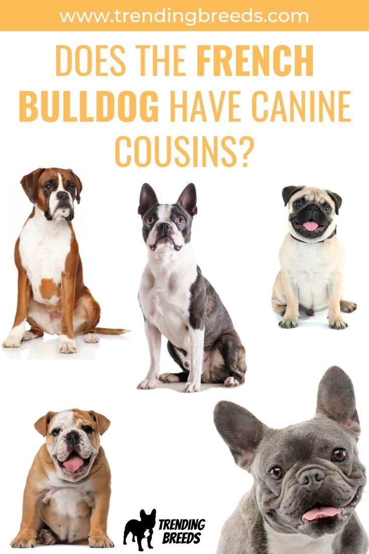Funny Bulldog Posters Zazzle Bulldog Funny Bulldog Dog School