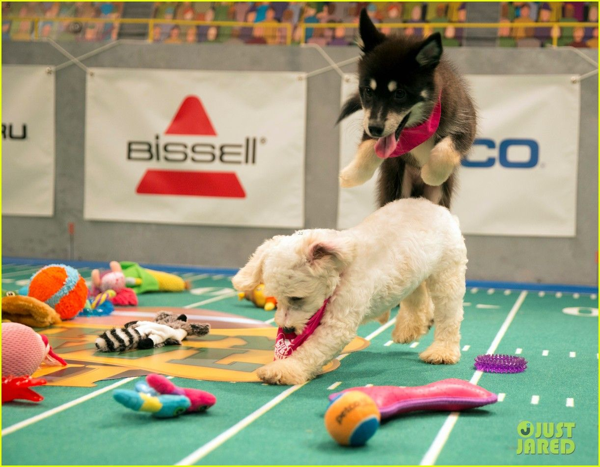 what is the puppy bowl 28 in 2020 Puppy bowls, Puppies