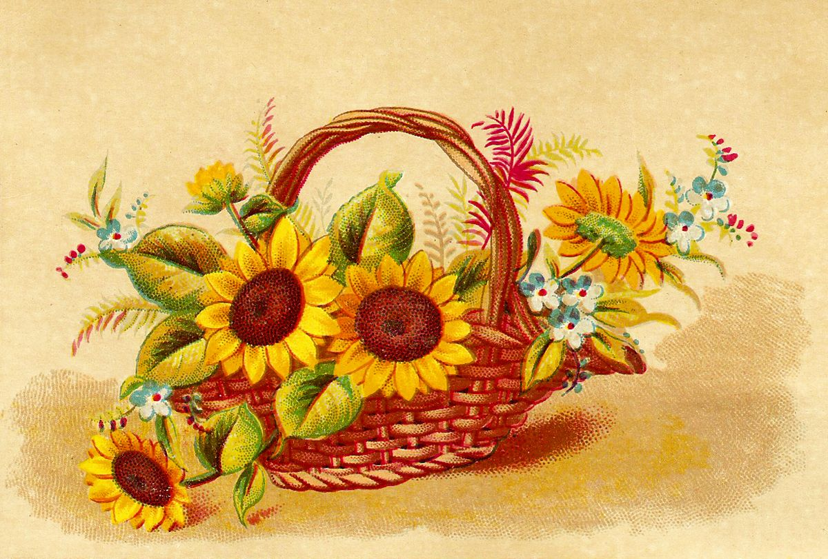 Art Basket Facebook : Fall flowers clip art catnipstudiocollage free vintage