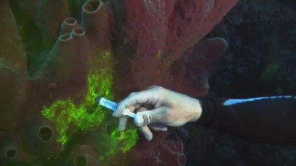 WorldAndScience: Sponges Filter Feed Shown Using Fluorescent Dye https://t.co/YCjM7QENIv