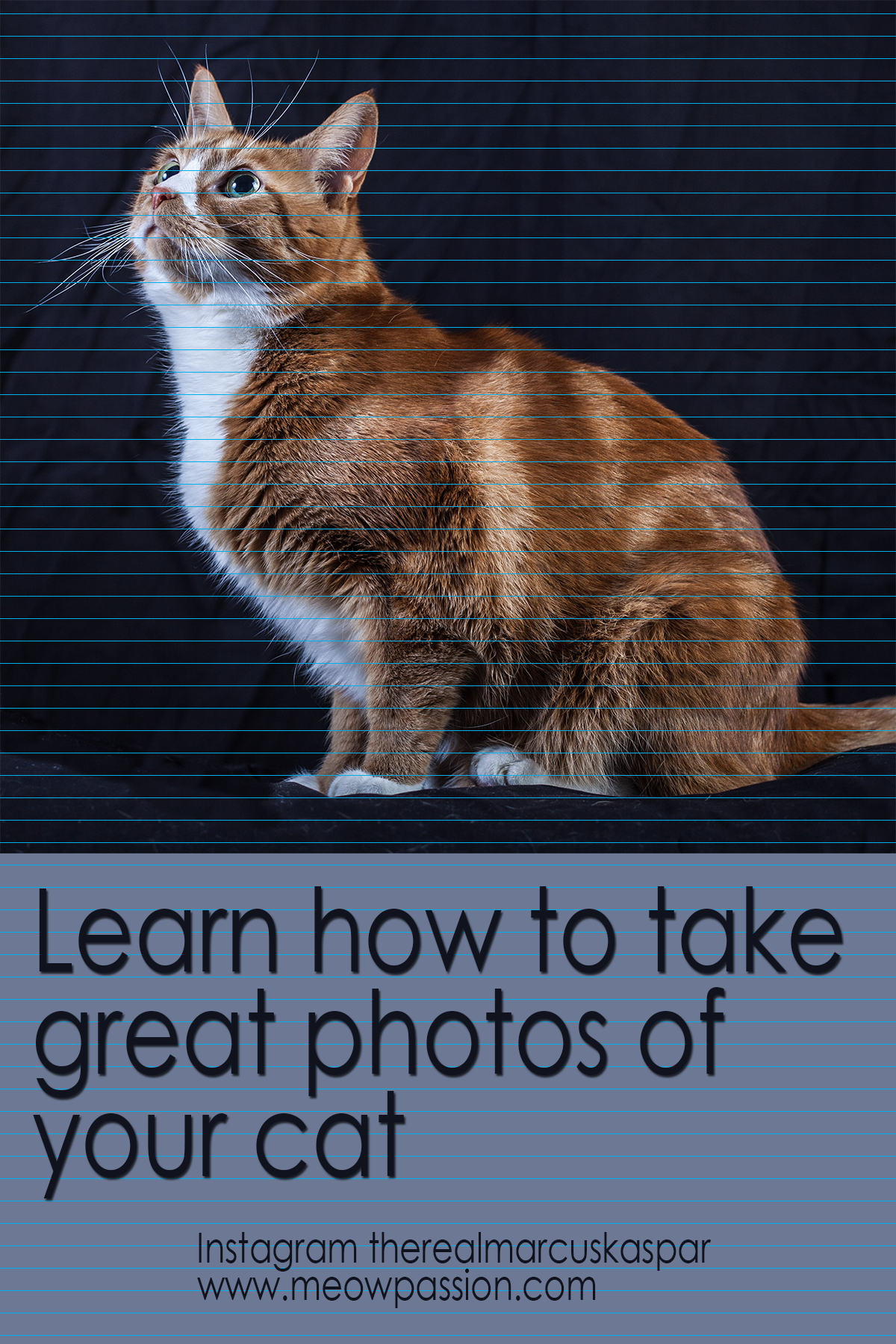 Cats Complete Guide To Owning And Caring For Your Feline Friend Meowpassion Cat Training Training A Kitten Cats