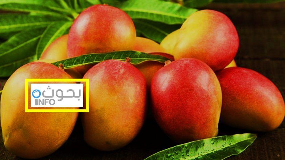مانجو القيمة الغذائية لهذه الفاكهة وفوائدها وأضرارها Fruit Apple Food