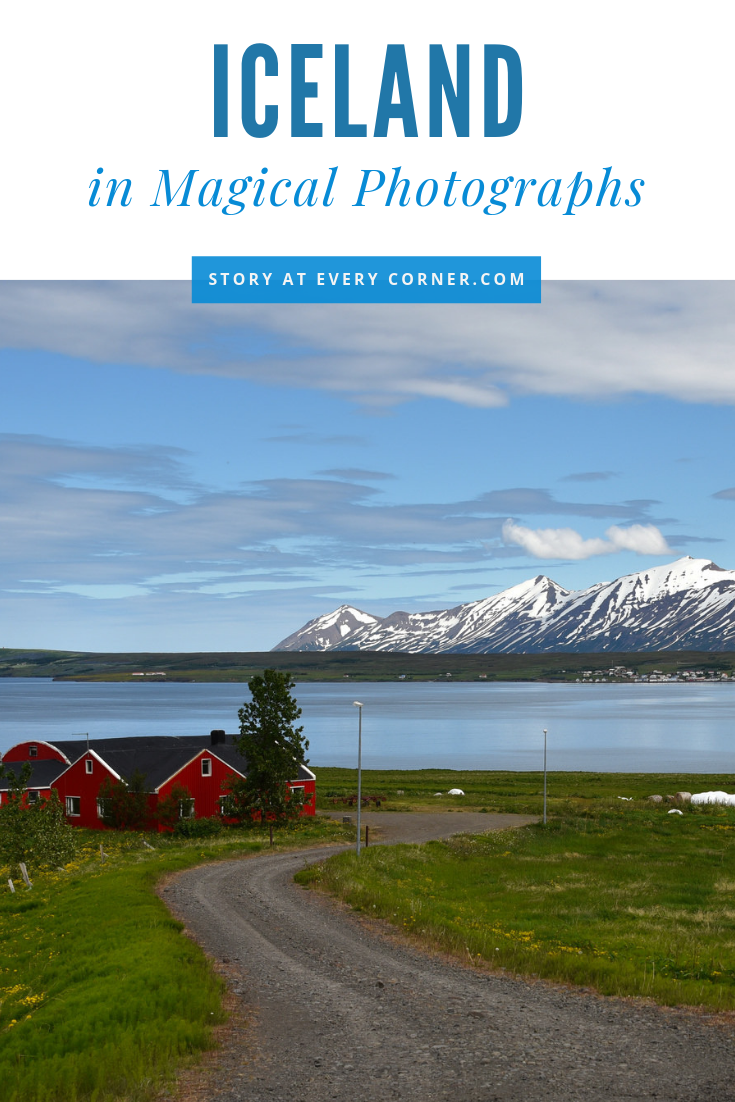 Our chosen 143 pictures will inspire you to enjoy wildlife, waterfalls, flower blooms, mountains & valleys and farms. The weather is lovely in summer with sunshine 23 hours a day, snow is melting, waterfalls are gushing, flowers are in bloom as far as the eyes can see. This is the best time for photography. #StoryAtEveryCorner #Iceland #icelandvacation #icelandtravel #photography #photos #nature #waterfall #naturephotography #naturelover #glacier #wildlife #wildlifephotography #wildlifeplant