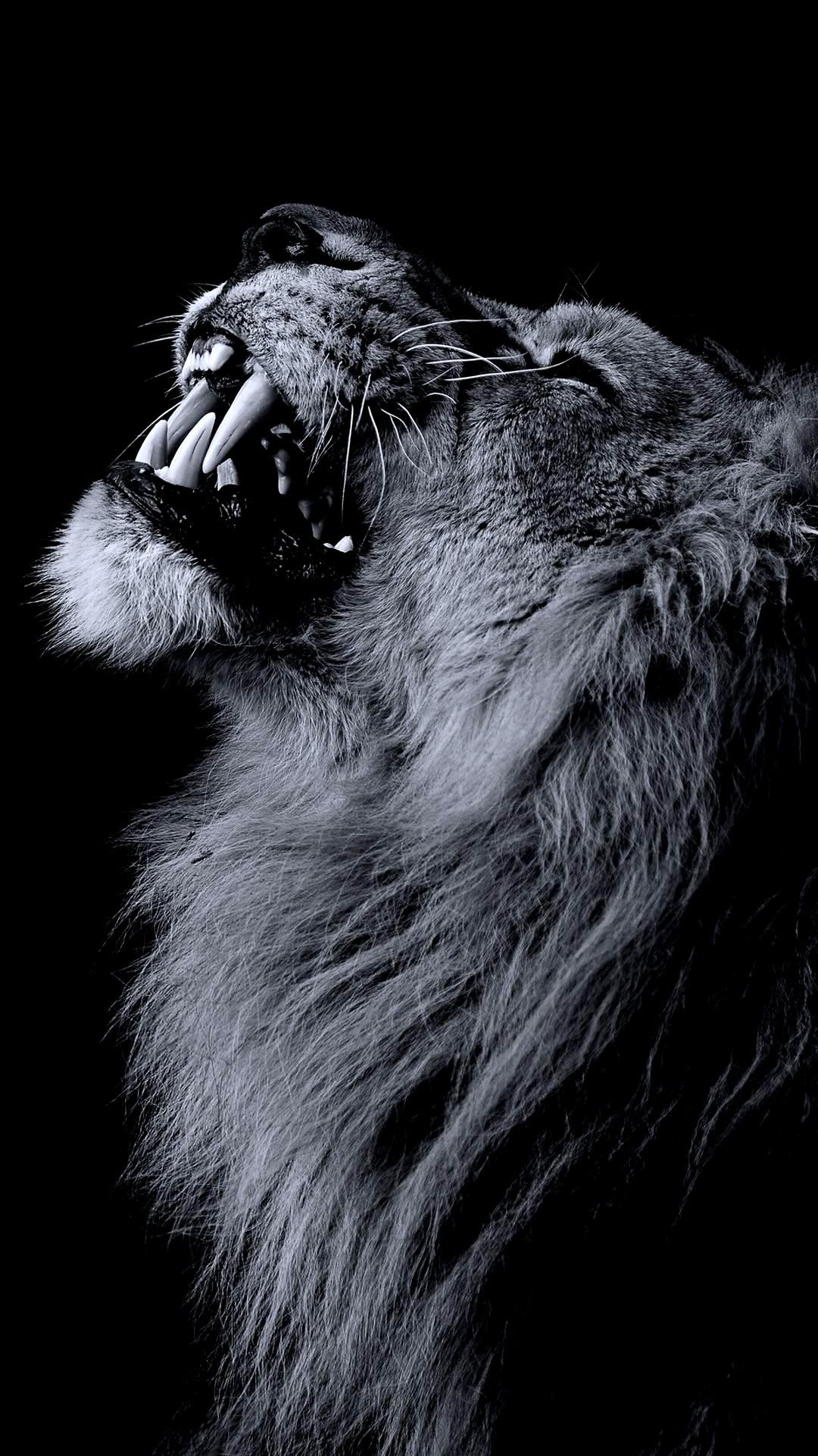 Black Lion Wallpaper 1080p Hupages Download Iphone Wallpapers