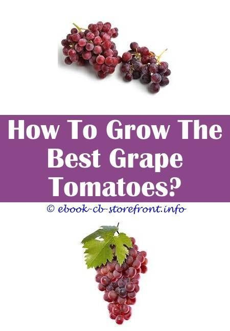 6 Fun Clever Hacks How To Grow Grapes Video how to grow brads atomic grape tom 6 Fun Clever Hacks How To Grow Grapes Video how to grow brads atomic grape tomatoBackyard G...