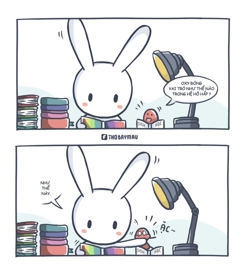 Thỏ Bảy Màu Tìm Với Google Anime Hài Hước Và ảnh Vui